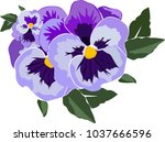 Viola Flower In Vector