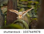 magic bird barn owl  tyto alba  ... | Shutterstock . vector #1037669878