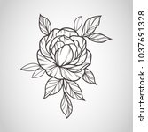 flowers drawing and sketch with ... | Shutterstock .eps vector #1037691328