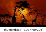 giraffes at sunset. beautiful... | Shutterstock . vector #1037709205