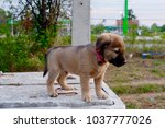puppy dog is standing on the... | Shutterstock . vector #1037777026