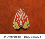 close up moth from nature  most ...   Shutterstock . vector #1037886325