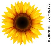 sunflower flower isolated ... | Shutterstock .eps vector #1037982526
