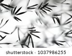 Small photo of Silhouette bamboo leaves on bright light white background. Bamboo leaves shadow in studio light
