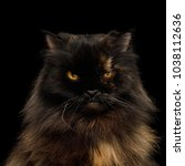 portrait of angry persian cat ... | Shutterstock . vector #1038112636