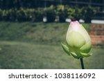close up beautiful pink lotus... | Shutterstock . vector #1038116092