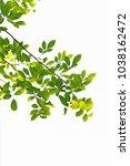 golden green leaves and... | Shutterstock . vector #1038162472