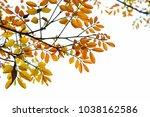 golden green leaves and... | Shutterstock . vector #1038162586