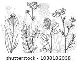 vectorhand drawn medical herbs  ...   Shutterstock .eps vector #1038182038