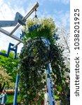 beautiful flowers in the park...   Shutterstock . vector #1038201925