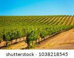 Californian Vineyard Landscape...