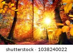 beautiful view of trees in... | Shutterstock . vector #1038240022