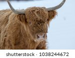 highland cows  coos  bos taurus ... | Shutterstock . vector #1038244672