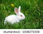 Stock photo little funny rabbit on the field in summer 1038272338