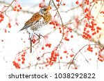 beautiful wild bird eating red... | Shutterstock . vector #1038292822