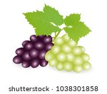 bunch of grapes. vector... | Shutterstock .eps vector #1038301858