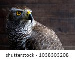 hawk close up. bird of prey... | Shutterstock . vector #1038303208