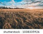 rural landscape  wheat field at ...   Shutterstock . vector #1038335926