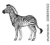 zoo. african fauna. zebra horse.... | Shutterstock .eps vector #1038354322