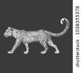 Zoo. African Fauna. Puma ...