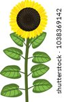sunflower with ripe black head... | Shutterstock .eps vector #1038369142