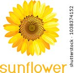 yellow flower of sunflower with ... | Shutterstock .eps vector #1038374152
