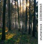sunbeams make their way through ... | Shutterstock . vector #1038380065