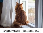 somali cat sunning in a window. | Shutterstock . vector #1038380152