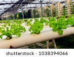 soilless cultivation of... | Shutterstock . vector #1038394066