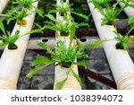 soilless cultivation of... | Shutterstock . vector #1038394072