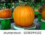 pick the pumpkin | Shutterstock . vector #1038394102