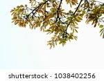golden green leaves and... | Shutterstock . vector #1038402256