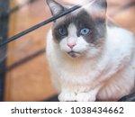 portrait of long haired bi... | Shutterstock . vector #1038434662