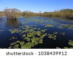 a pond along the anhinga trail... | Shutterstock . vector #1038439912