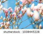 magnolia flowers backgroud sky | Shutterstock . vector #1038445228