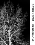 silhouette of tree branches on... | Shutterstock . vector #1038458698