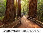 trail through redwoods in muir...   Shutterstock . vector #1038472972