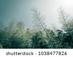 bamboo grove  bamboo forest at...   Shutterstock . vector #1038477826