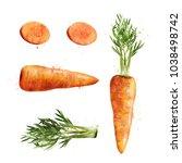 carrot on white background.... | Shutterstock . vector #1038498742