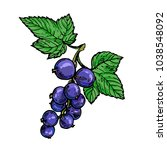 ripe black currant berries... | Shutterstock .eps vector #1038548092