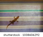 lizards on the wall | Shutterstock . vector #1038606292