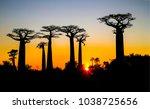 sunset baobab silhouettes... | Shutterstock . vector #1038725656
