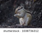 squirrels are members of the... | Shutterstock . vector #1038736312