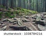 stone road in a coniferous...   Shutterstock . vector #1038784216