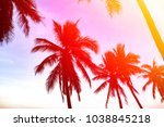 Silhouette Of Coconut Palms On...
