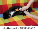 mistress combing her cat.... | Shutterstock . vector #1038848632