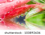 fresh water drops in flower. in green nature or in forest - stock photo