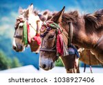 horsese with bells and nepalese ... | Shutterstock . vector #1038927406
