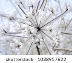Weeds With Snow In Close Up....
