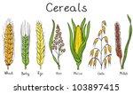 cereals hand drawn illustration ... | Shutterstock .eps vector #103897415